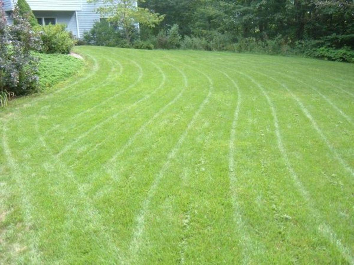 planting-lawn-sod-tips