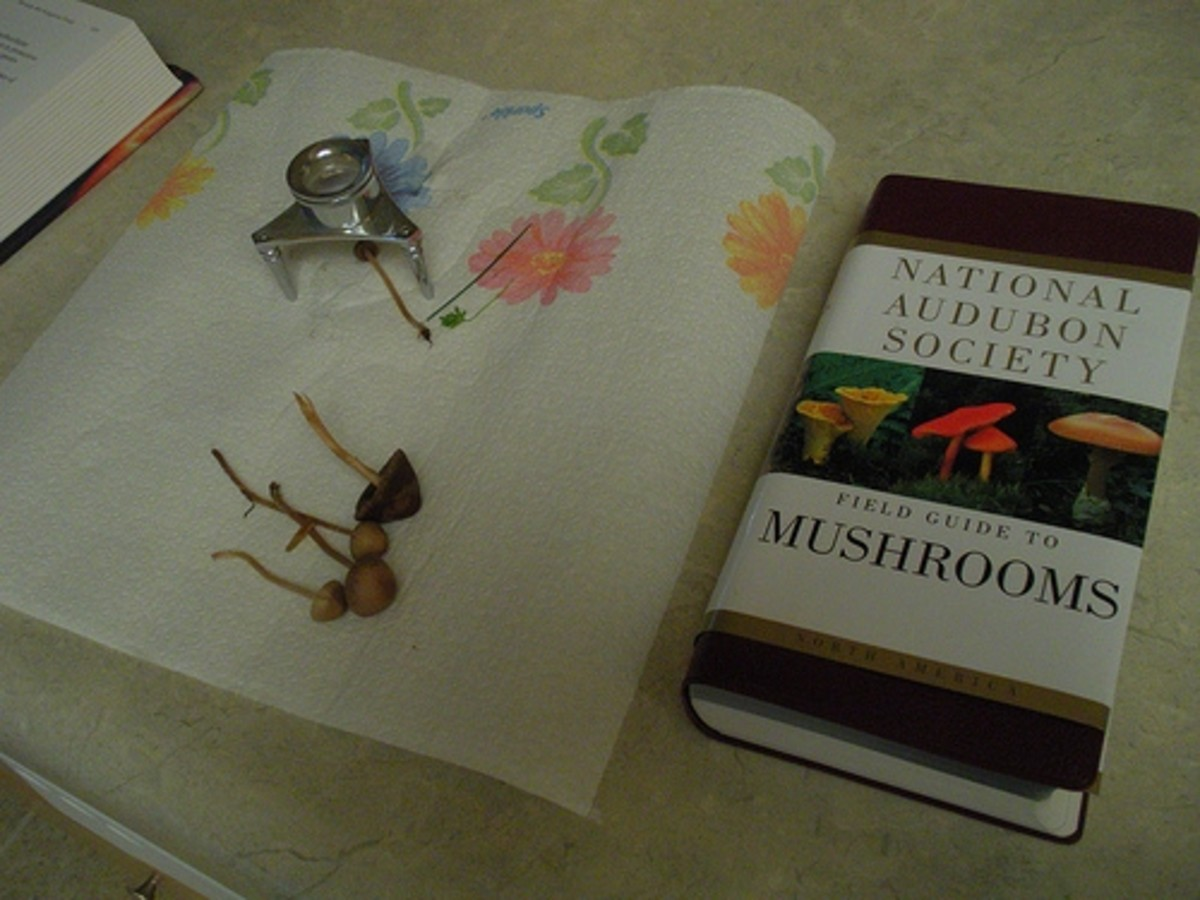 Mushroom study with a field guide