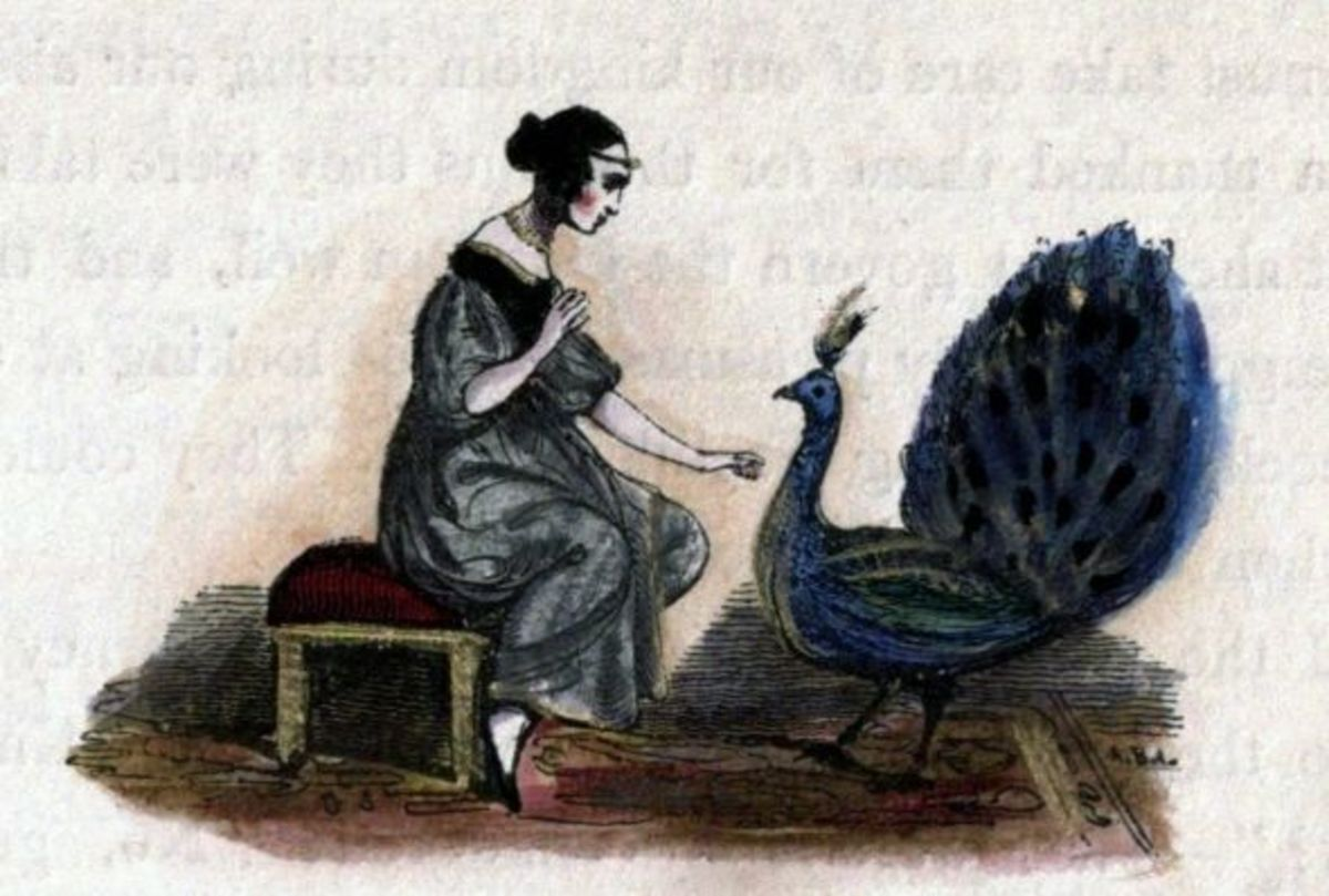 Artists have used the peacock to illustrate vanity of life