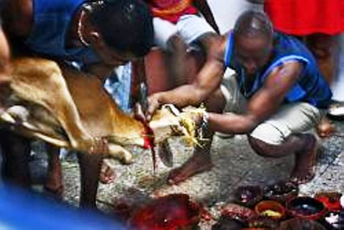goat being sacrificed