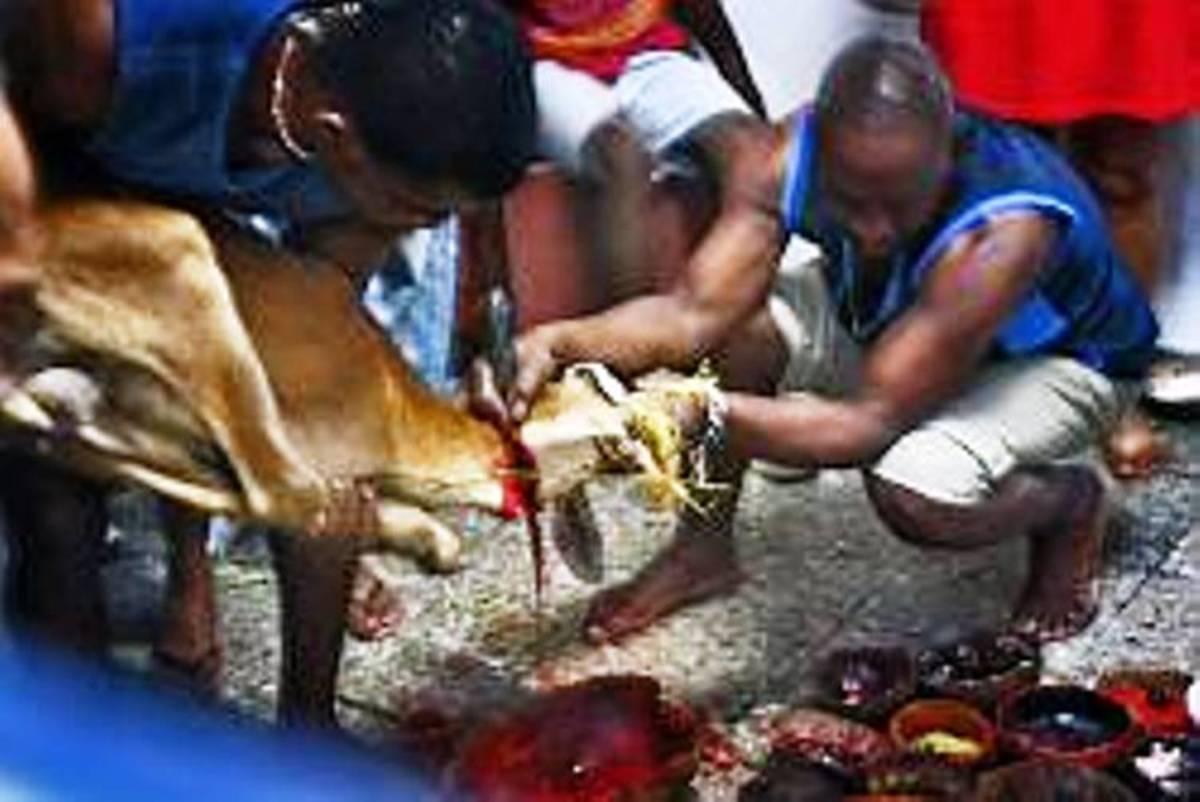 goat being sacrificed