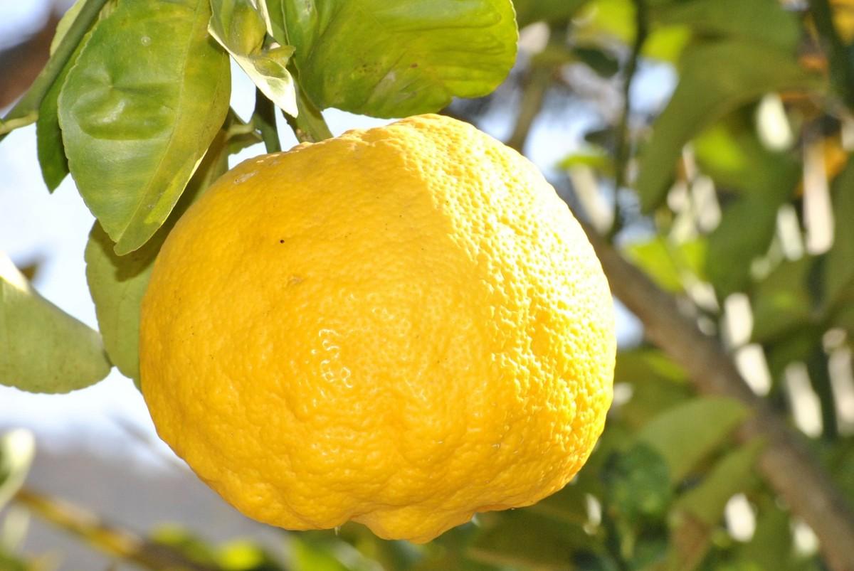master-cleanse-lemonade-diet-2