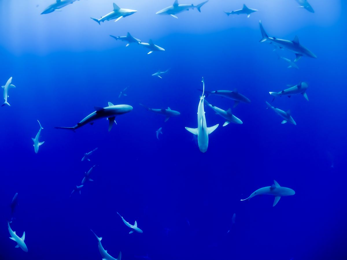 shark-cartilage-uses-and-possible-health-benefits