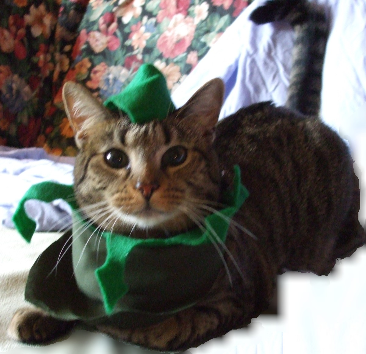 This cat costume is totally made from fabric and felt scraps I already had.