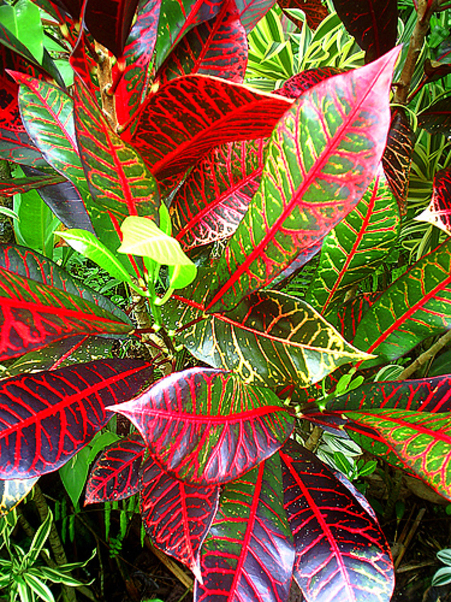 Photo Gallery: The amazing colors and patterns of tropical foliage