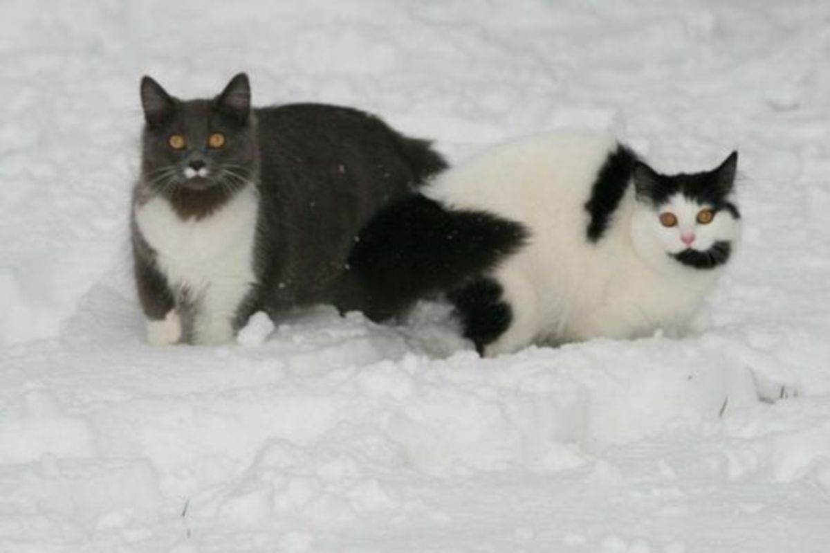 Dippy and Greebo Snow Walk