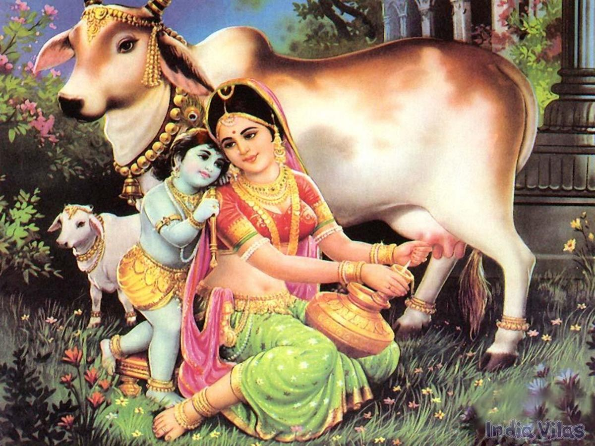 Lord Krishna with the venerated cow.