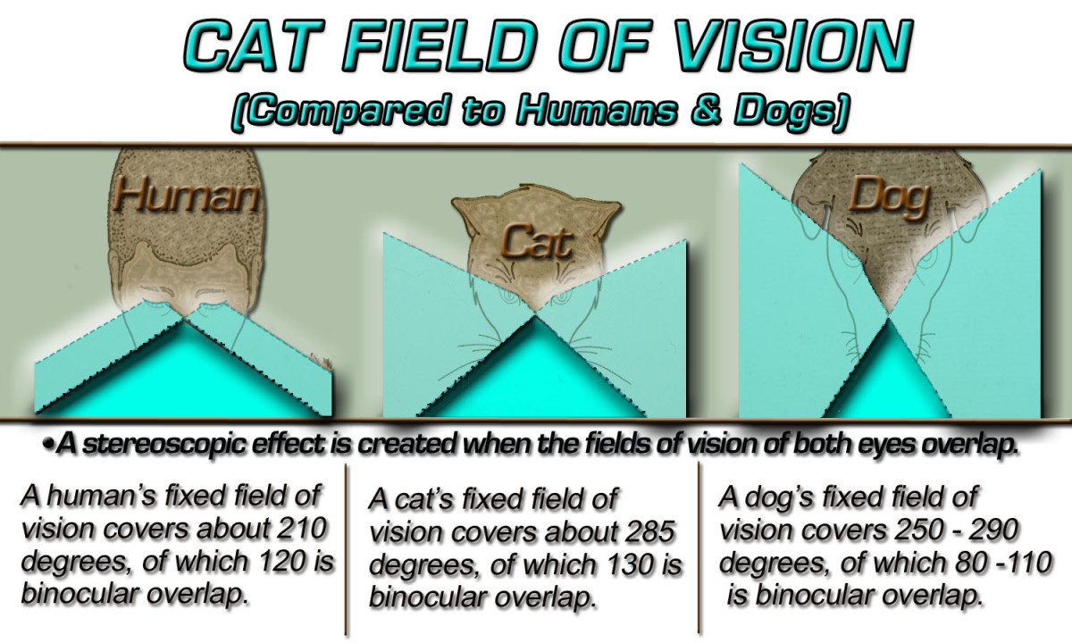 A diagram comparing a cats field of vision to that of Humans and dogs.