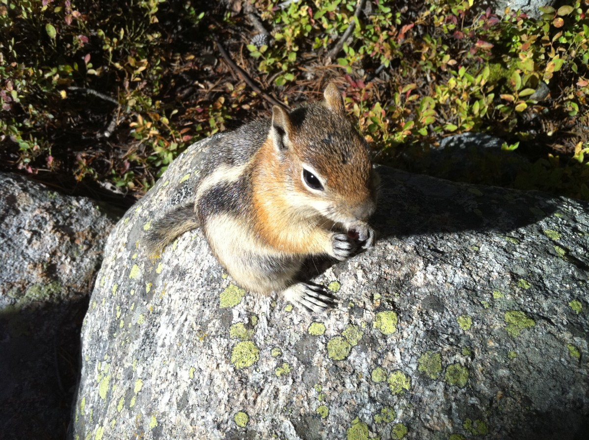 Close up shot of a squirrel at the Rocky Mountain National Park
