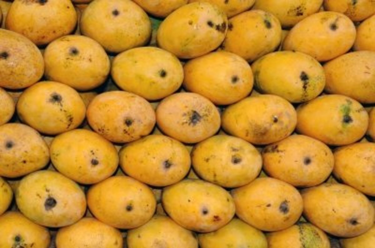 The Benefits Of Mango