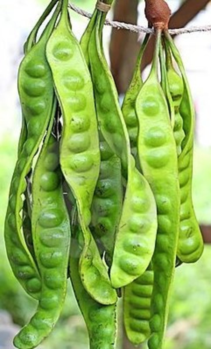 Nutrients In Petai - The Benefit Of Stinky Bean
