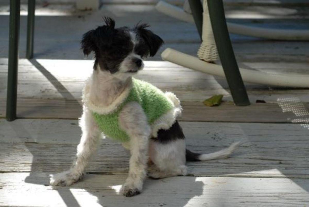 Miki Puppy