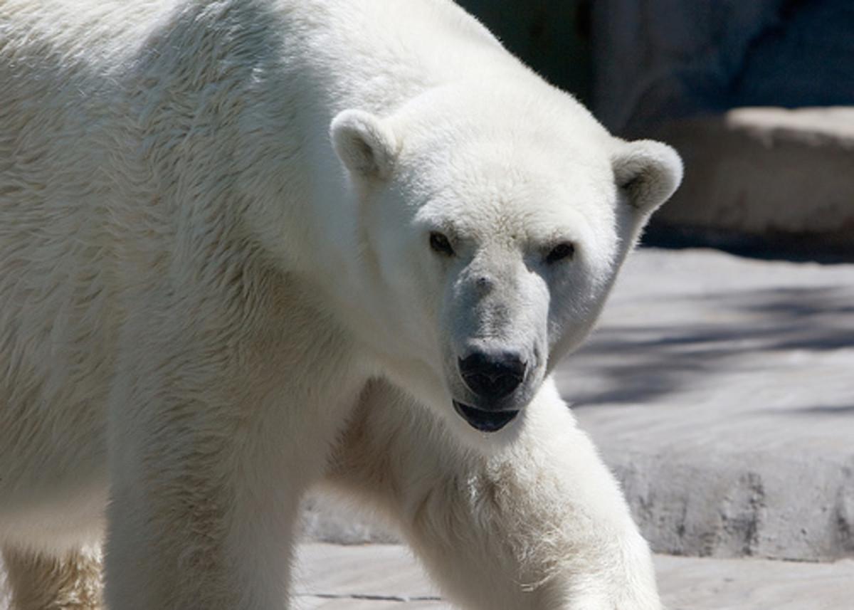 The Polar Bear, Monsanto, and The US Military.