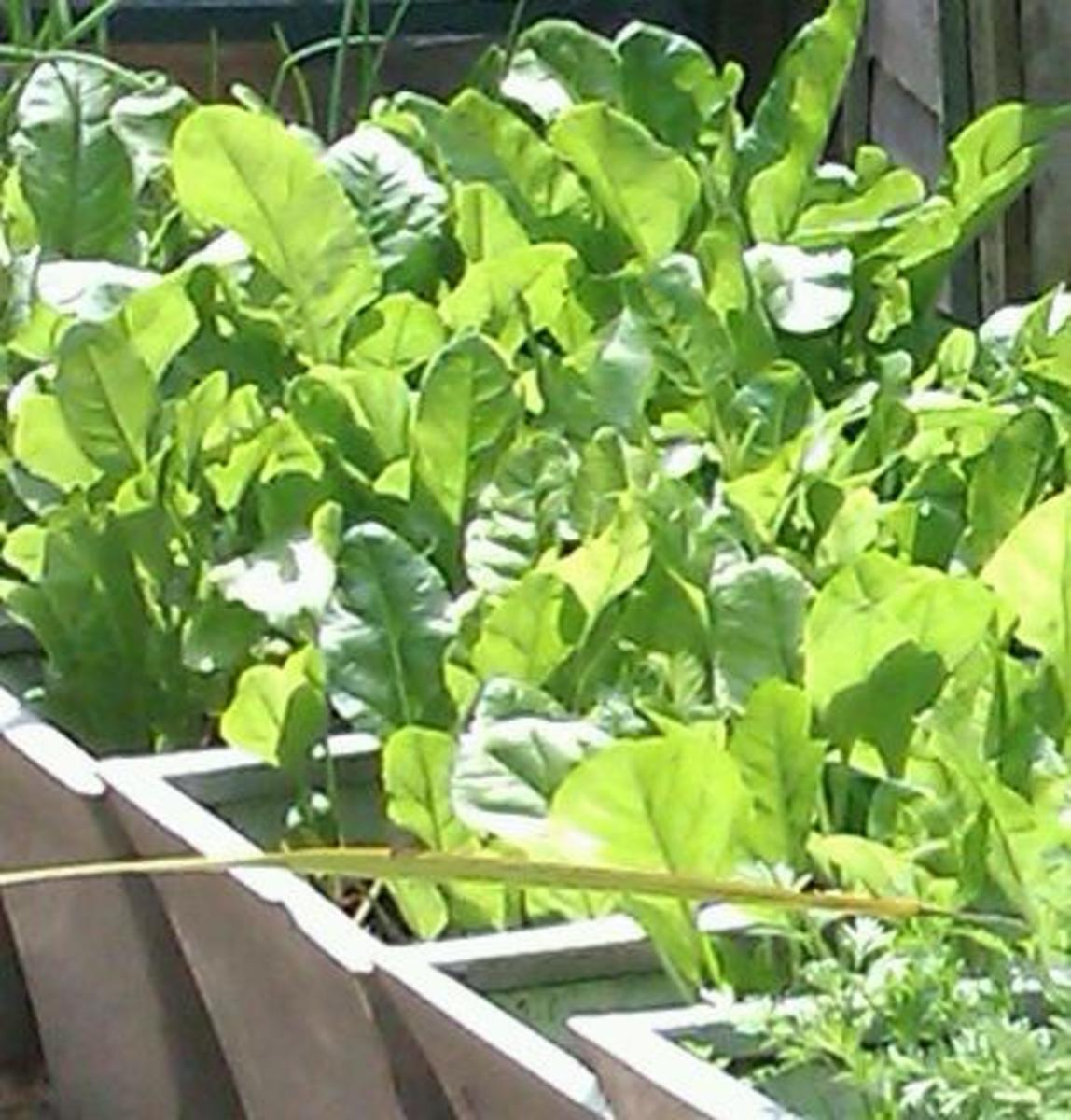 Growing Vegetables In Pots - How To Grow Shade Loving Edible Plants
