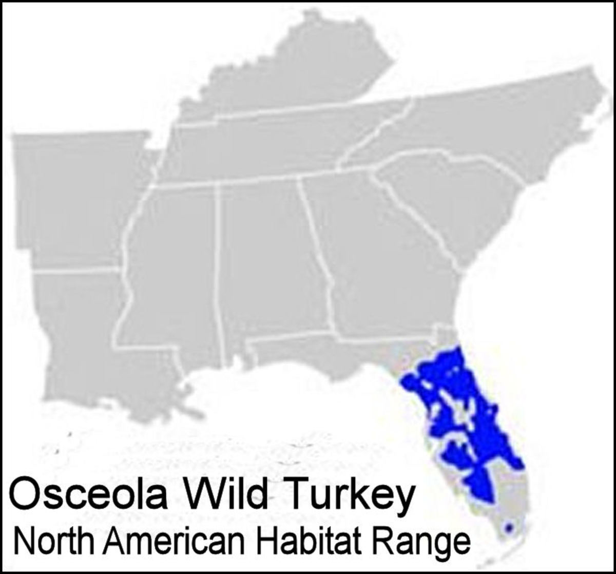 The Osceola subspecies' range is restricted to the central area of the Florida Peninsula.