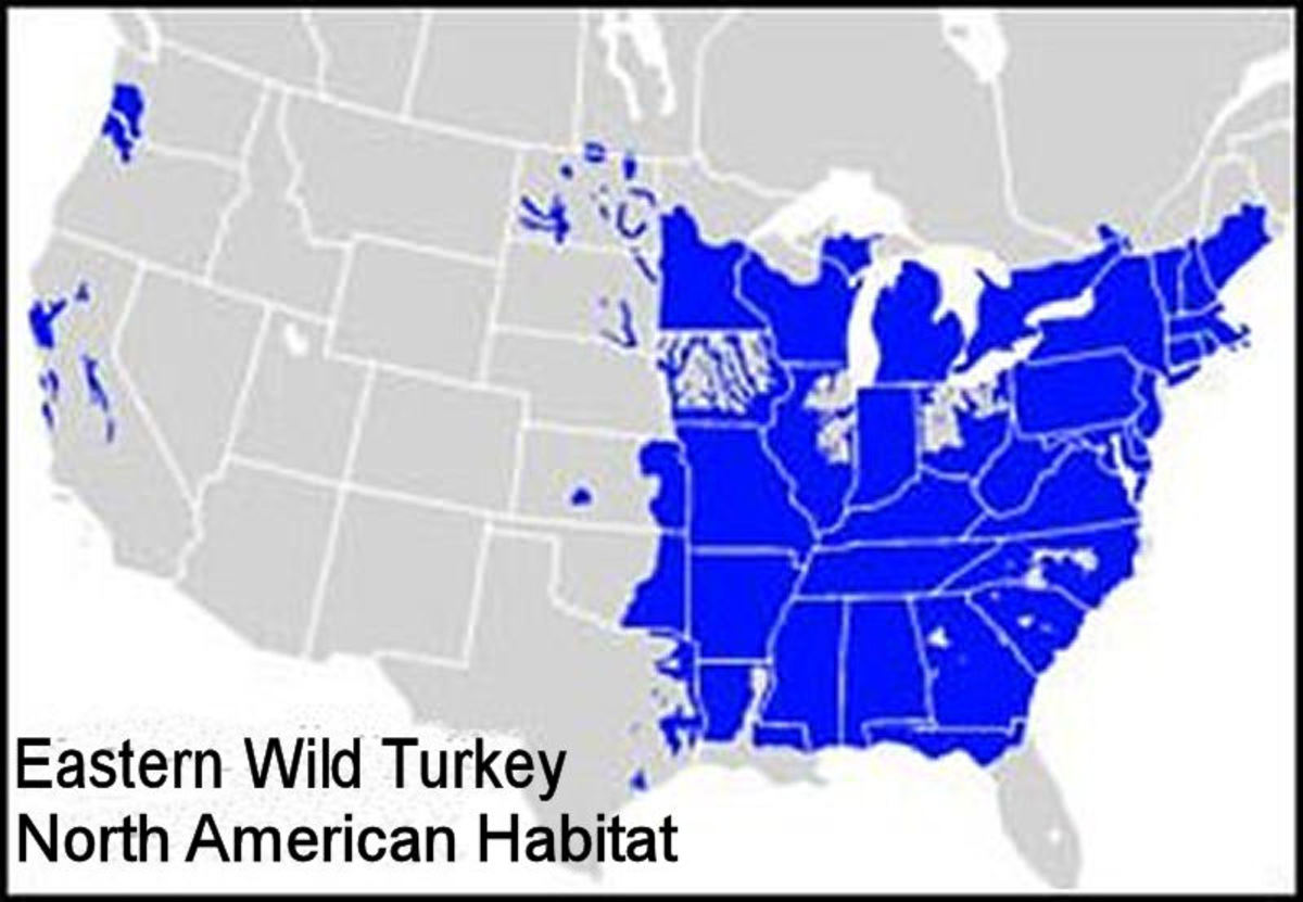 Most of the eastern wild turkey population inhabits the eastern half of the united states.