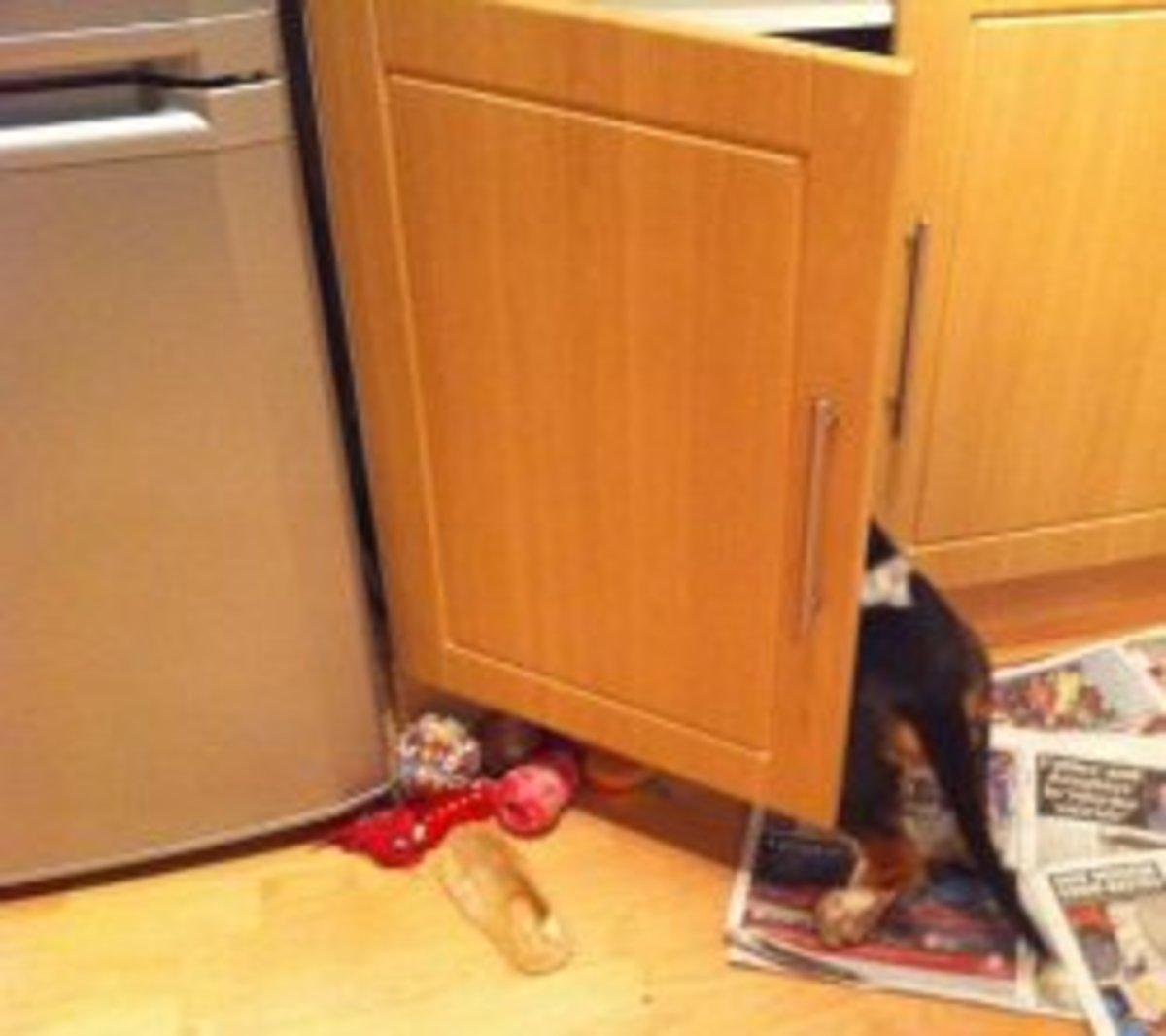 Child door locks will keep your basset hound puppy out