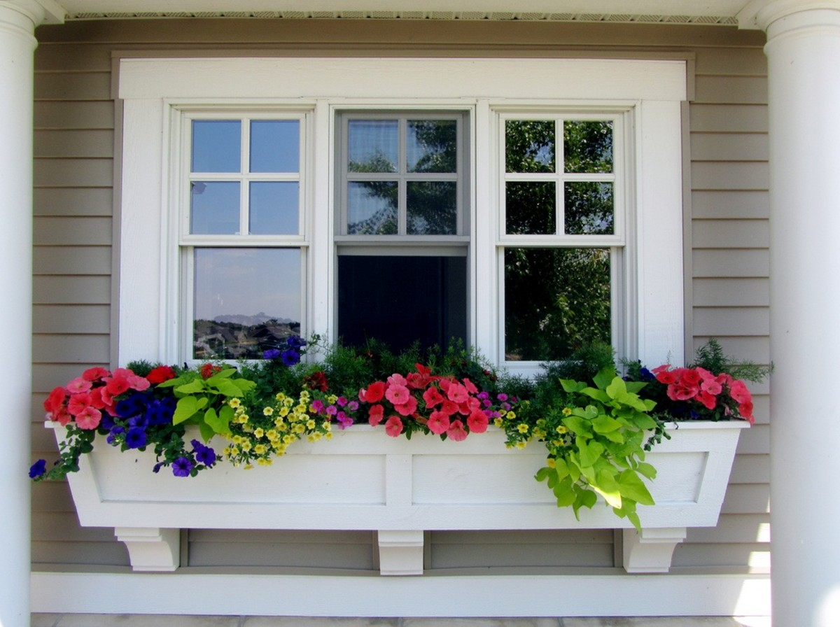 What flowers/plants would you use if you only had room for a window box garden?