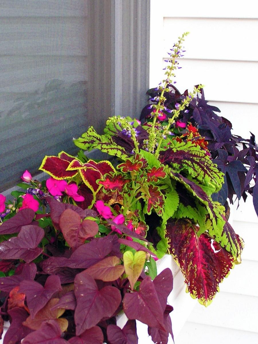 foliage window box
