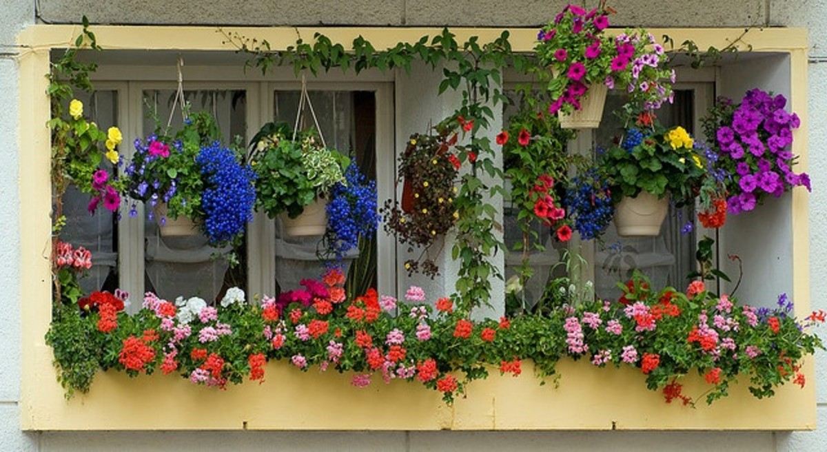 stunning window box and hanging baskets display