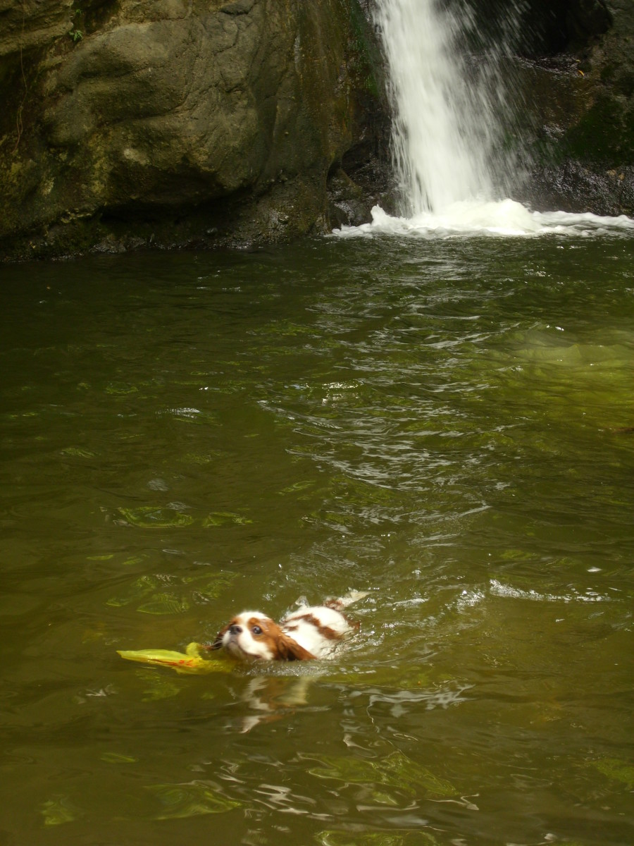 Angus swimming at Busay Waterfalls.