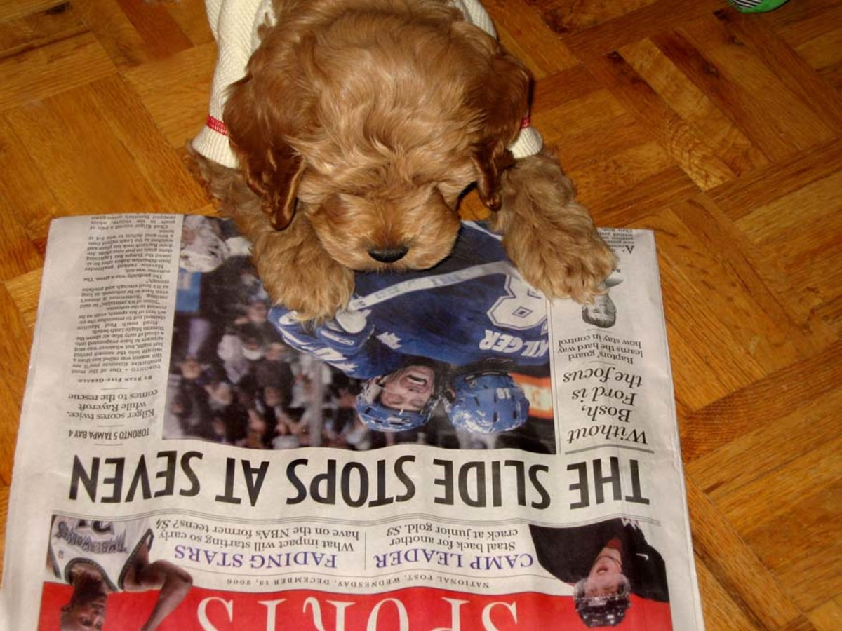 My dog, Simba is interested with the news.  :)