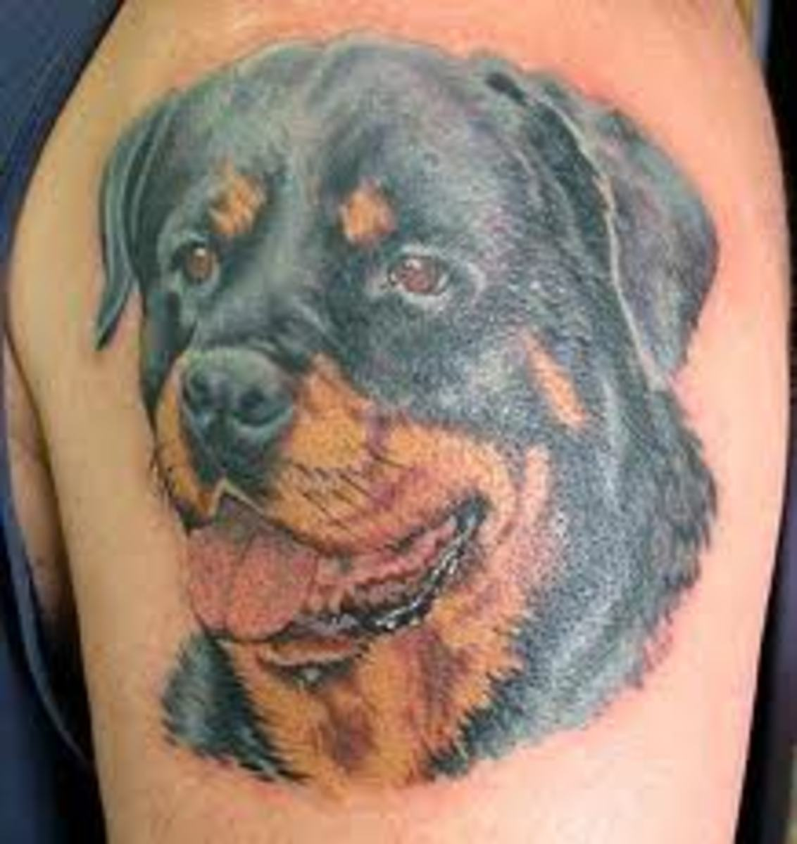 Tattoo Designs Tattoo Pictures: Rottweiler Tattoos And Meanings; Rottweiler Tattoo Designs