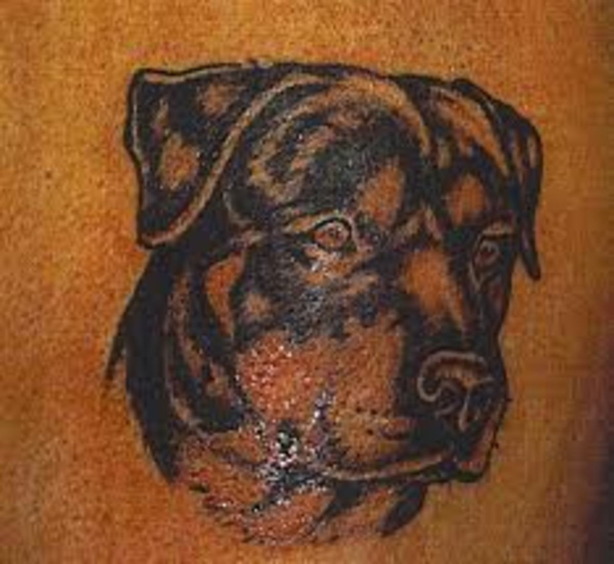 rottweiler tattoos and meanings rottweiler tattoo designs