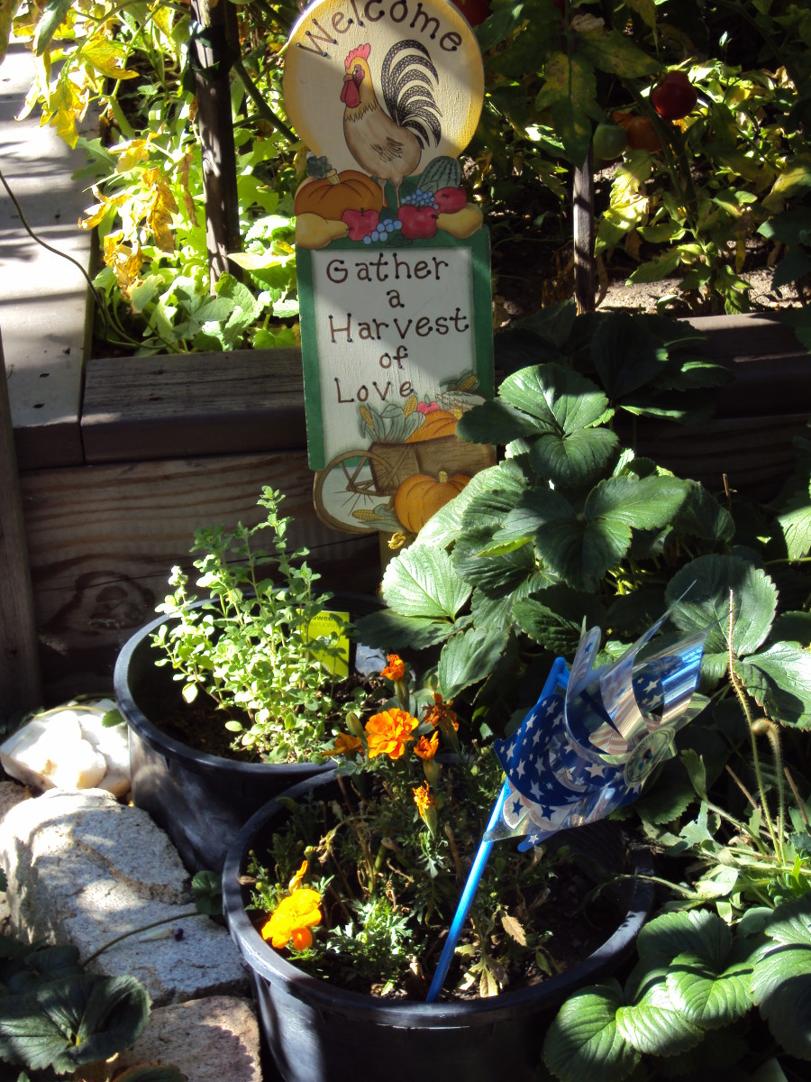 Signs and pinwheels as decorations in the garden.
