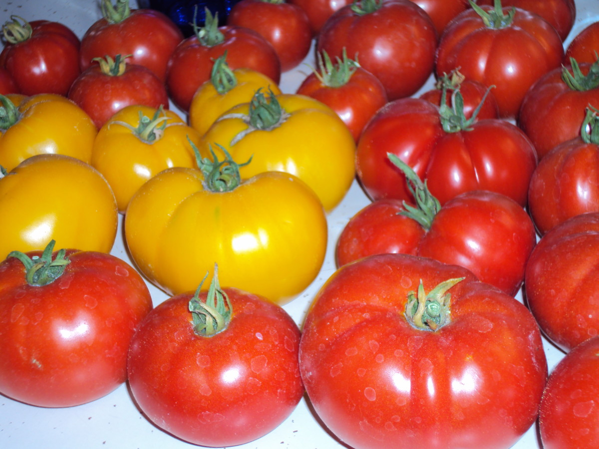 Try growing a few yellow beefsteak tomatoes for a pop of color, and taste slighter sweeter to me.