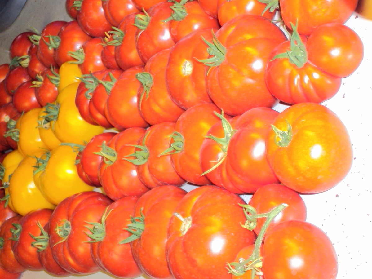 Grow your own tomatoes and save lots of money.