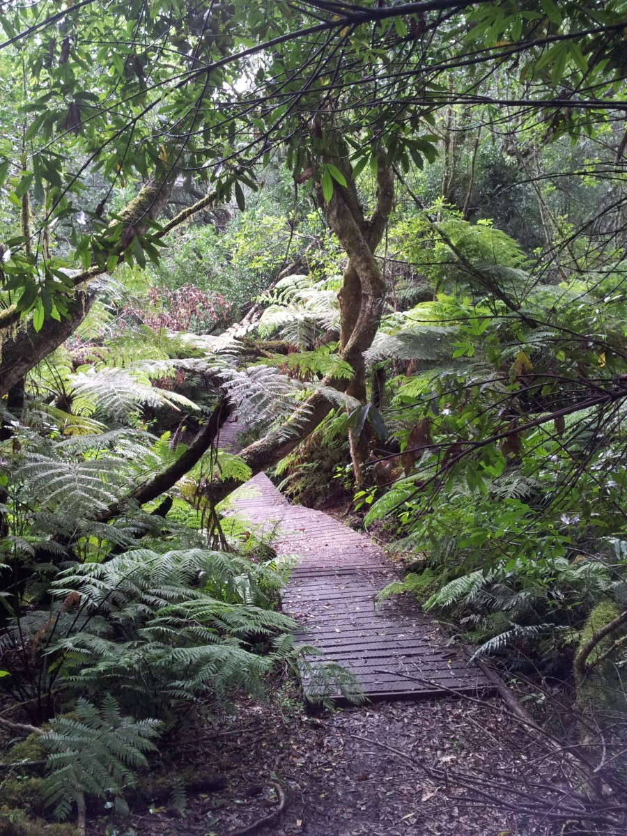 A walk in the forest in Knysna