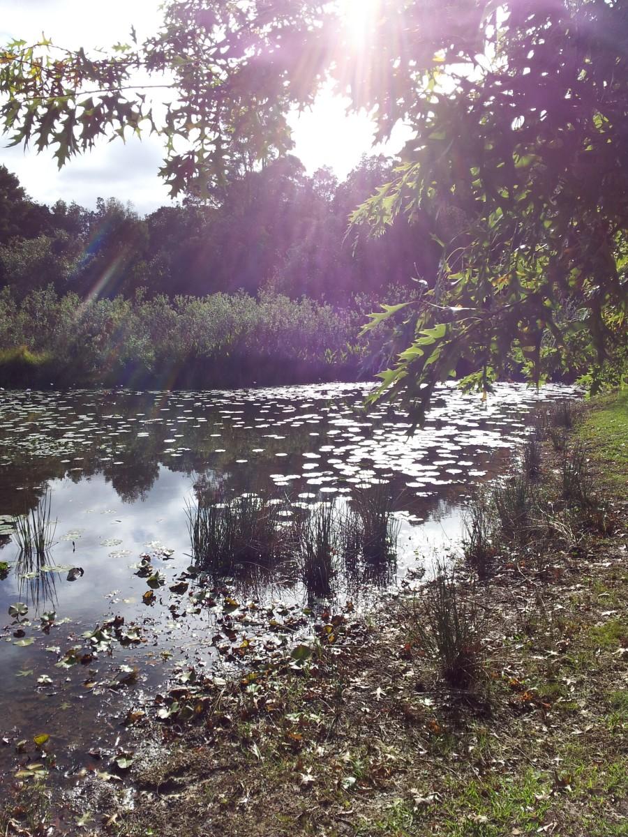 Beautiful pond in Knysna