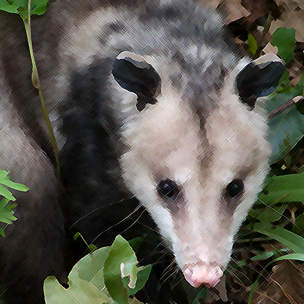 "My photomanip based on several magnificent opossum photos by ""Jess Beemouse"" on Flickr."