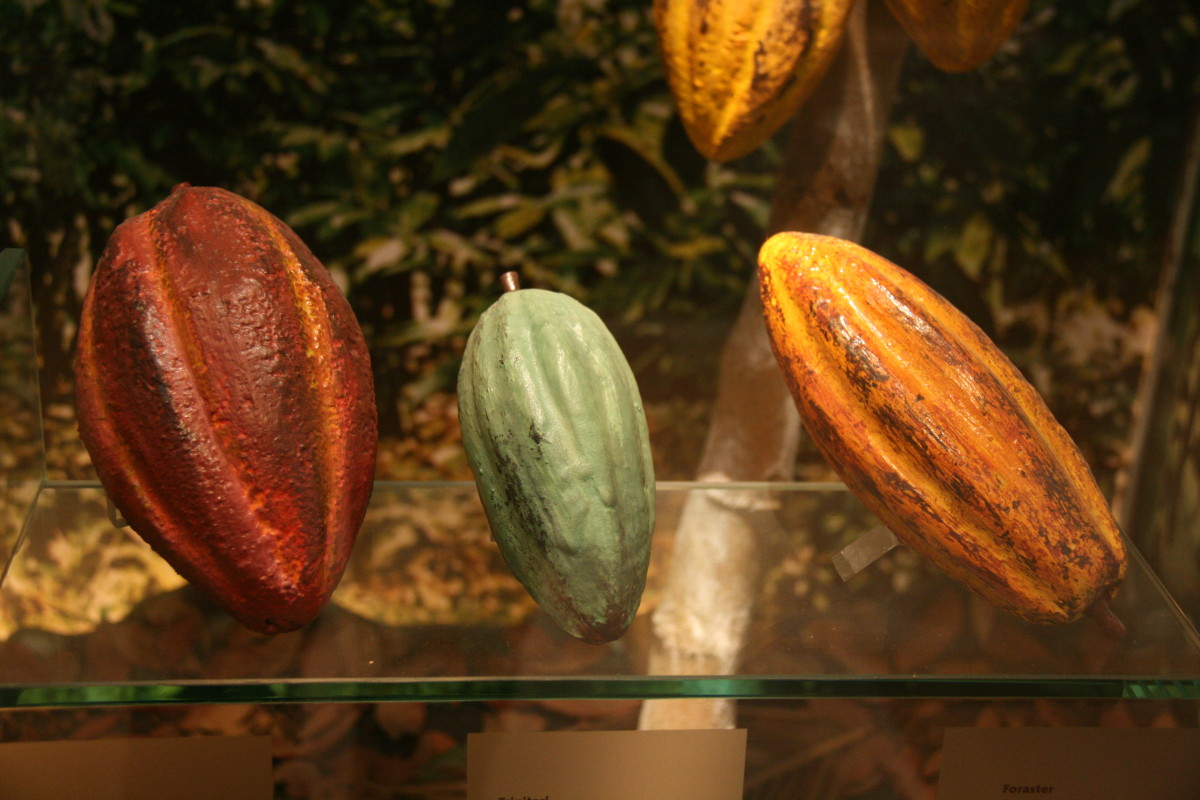all-about-chocolates-and-the-health-benefits-of-dark-chocolate