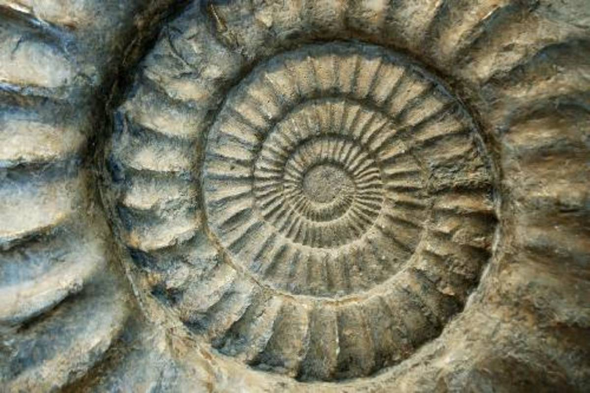 Natural dialectics of dialectical naturalism describes all the processes of nature of which we and our societies are a part. In this example of an ancient petrified shell, we the spiral of dialectical naturalism set in stone. Nature abounds with this