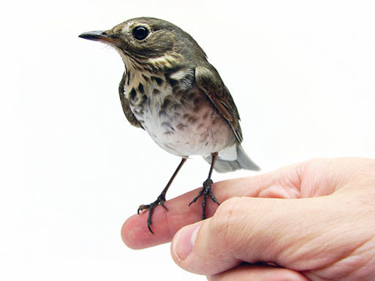 Bird Idioms and Proverbs (and Their Possible Origins)