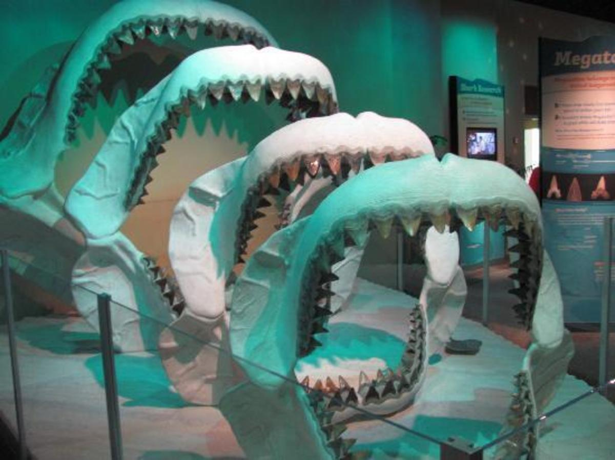 megalodon teeth and jaws at Mississippi Museum of Natural Science