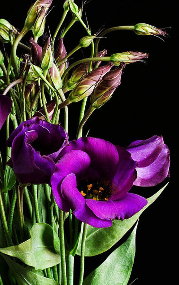 how-to-keep-cut-flowers-fresh-longer
