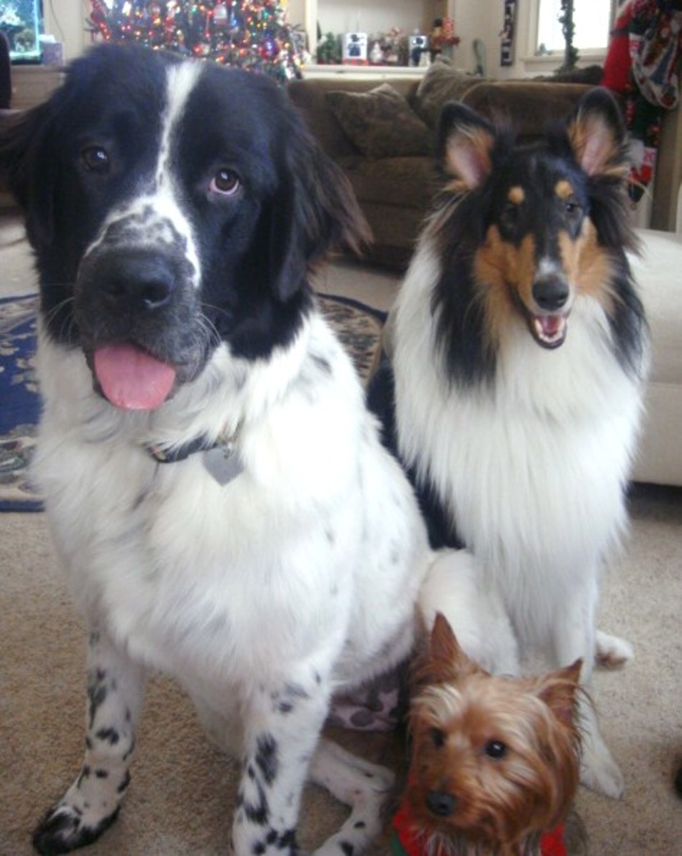 Millie, Jasper and Spike