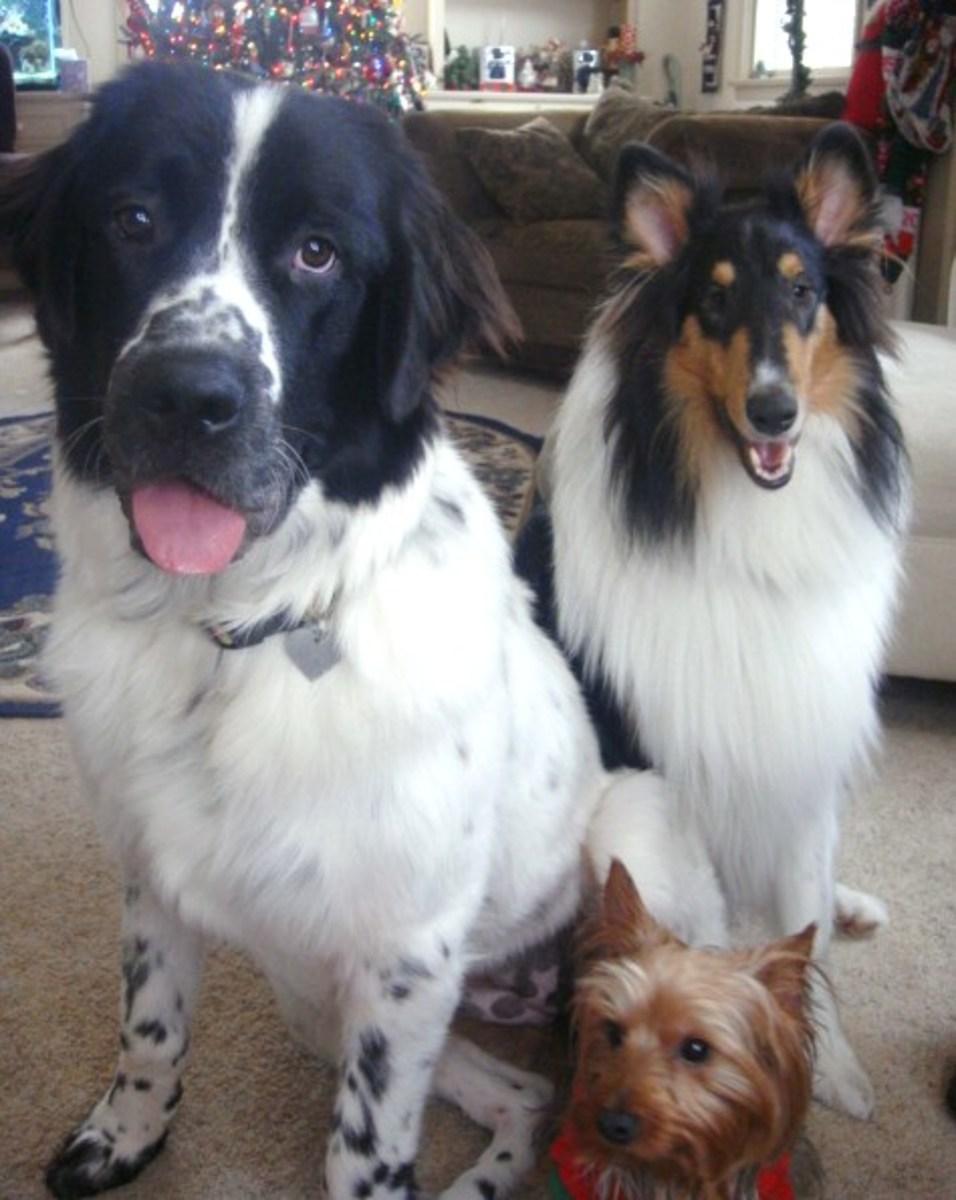 Millie, Jasper and Spike