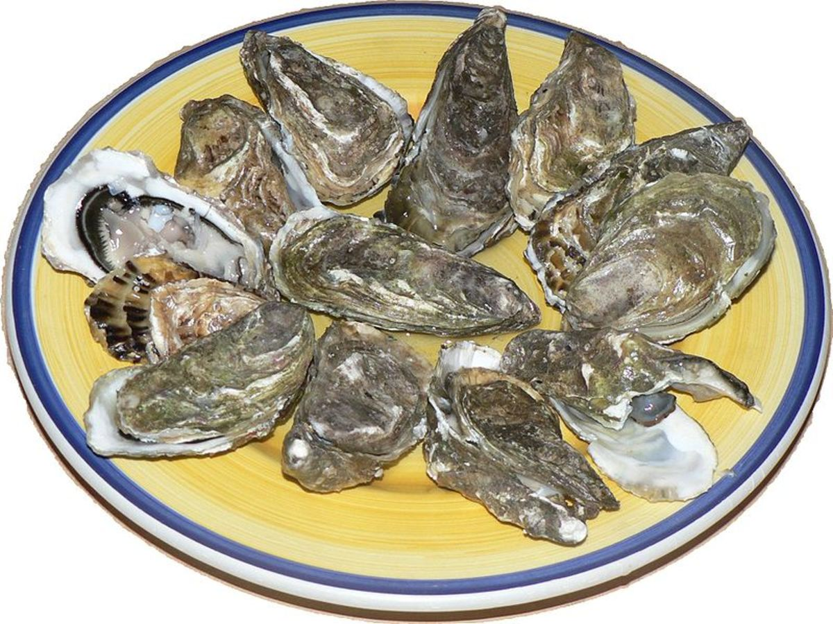Here in this photo is a plate of raw oysters with some of them open and ready for eating.