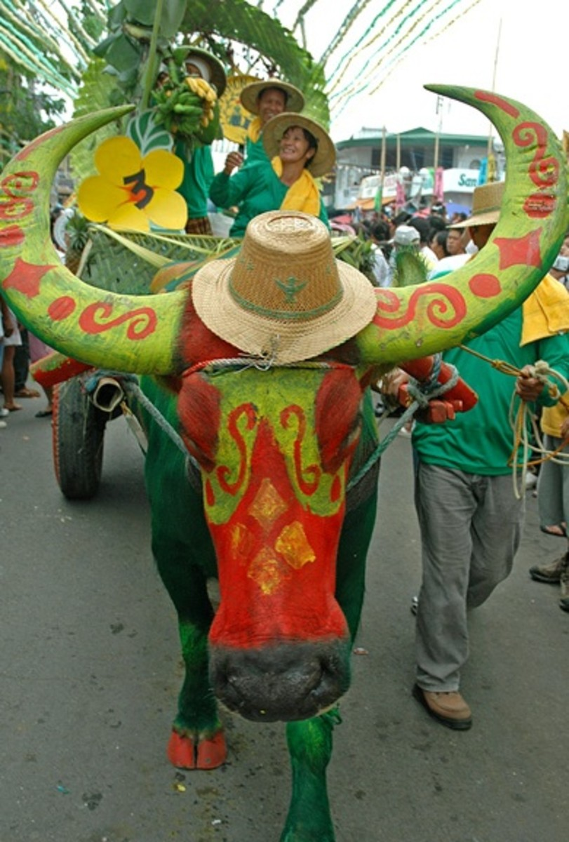 A decorated carabao in Pulilan Festival