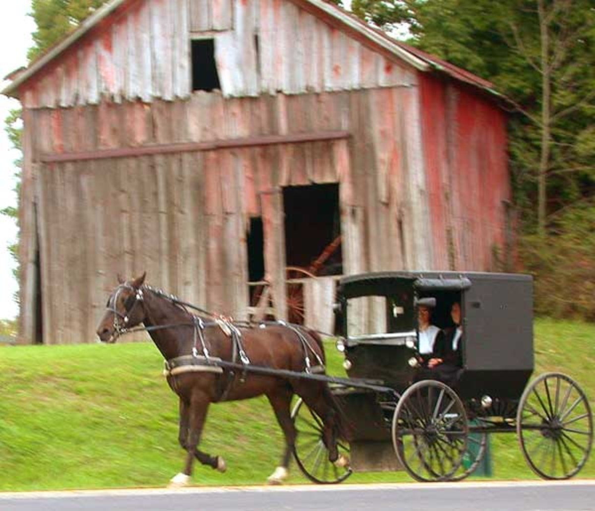 Amish horse and buggy in Holmes County, OH.