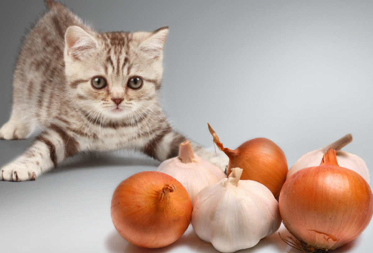 Keep cats AWAY from onions or garlic (or chives).