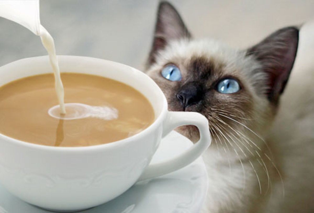 Keep kitty away from coffee, never let them have caffeine, it is poisonous to them in large amounts.
