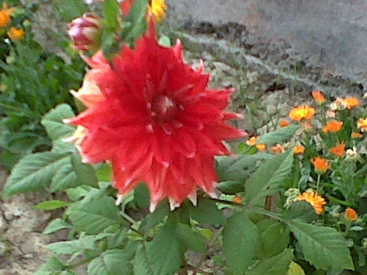 I Wish! I were a flower. . .