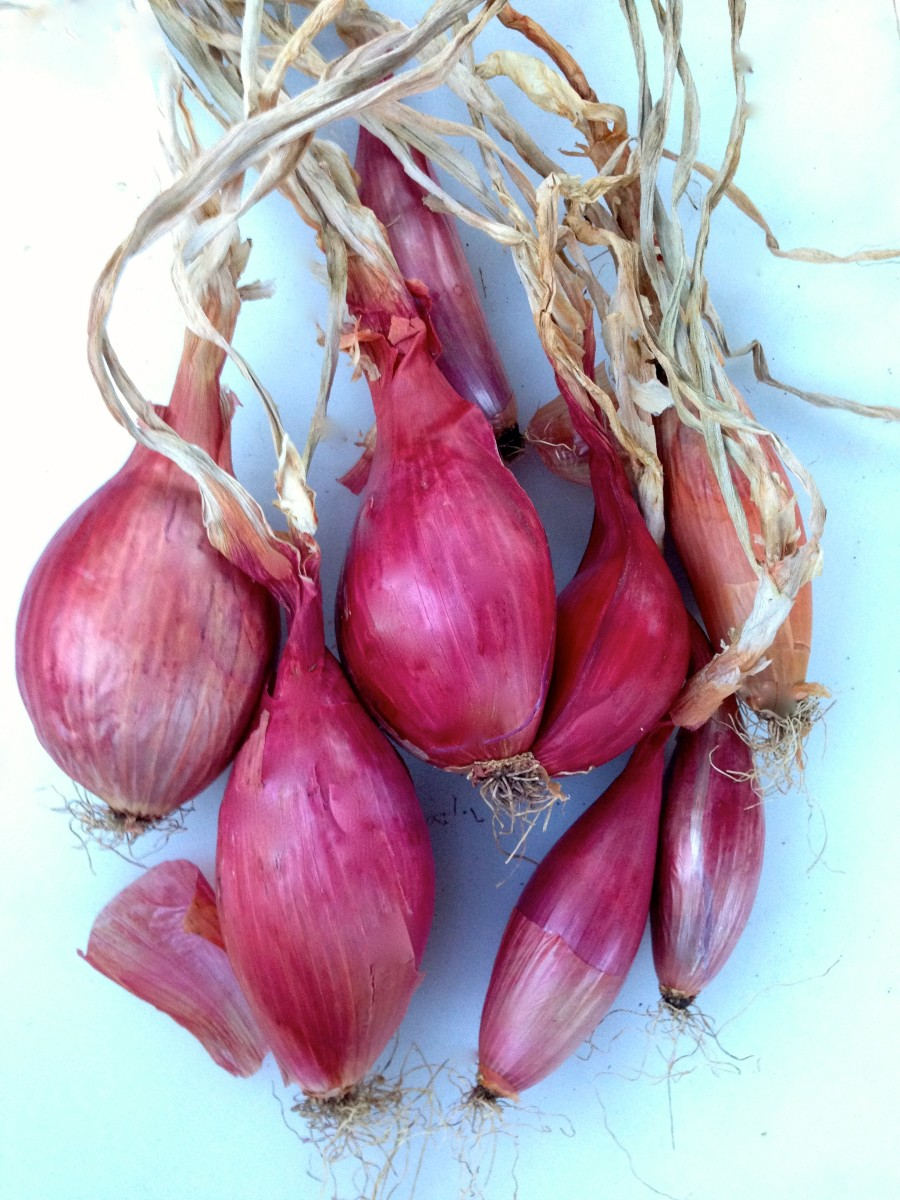 Good enough for fresh eating, salads and sandwiches. Pink pickled onions are a must.