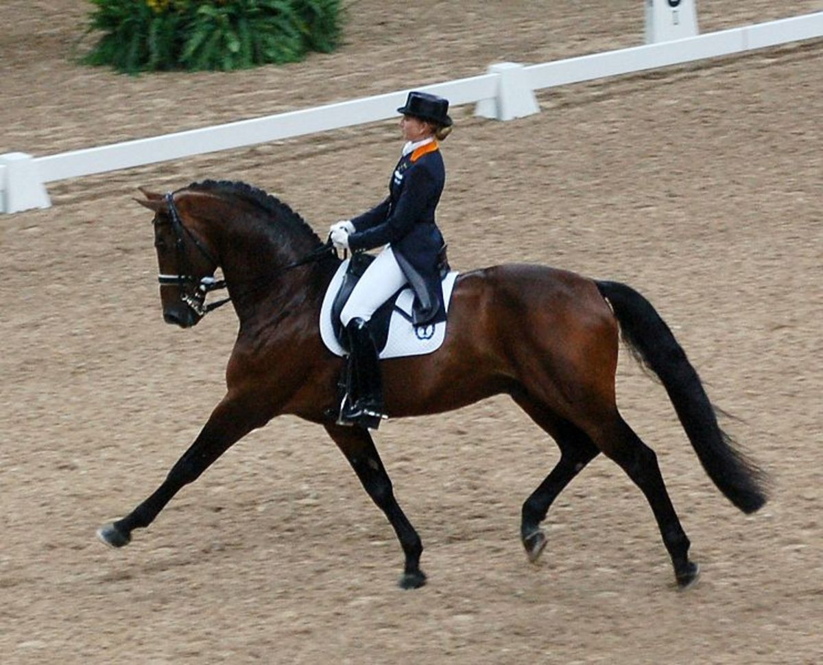 Horse performing an Extended Trot