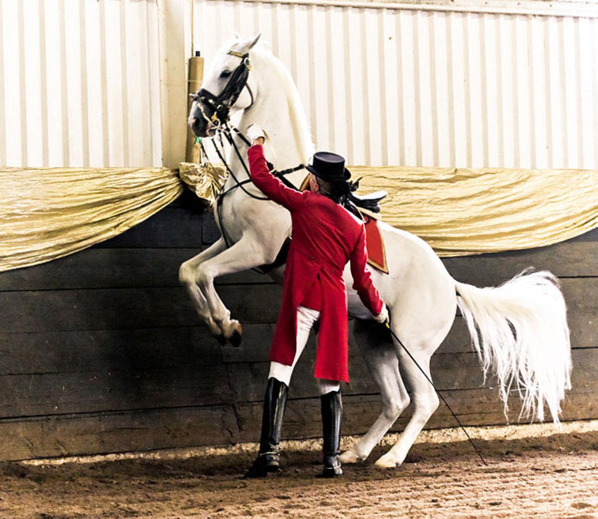 Horse performing a Pesade